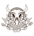 cow or bull skull with roses outline isolated on vector image
