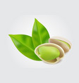 pistachio nuts with leaf isolated on white vector image