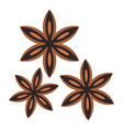 star anise spice icon isolated vector image