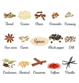 Icon set with titles of popular culinary spices vector image