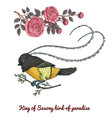 small birds of paradise king of saxony in new vector image