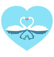 two white lovers swans in blue heart vector image