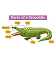 Diagram showing parts of crocodile vector image