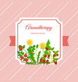 medical aromatherapy herbs label design vector image
