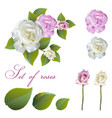 flowers and rose buds vector image