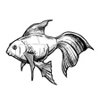 sketch of Gold fish vector image