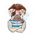 pirate pug dog on blue background vector image