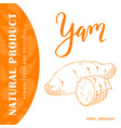 vegetable element of yam hand drawn icon vector image