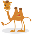 Cartoon camel vector image