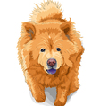 color sketch of a dog chow-chow breed vector image