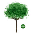Green tree isolated on white vector image vector image