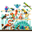 Jungle Birds Set vector image