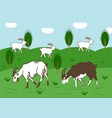 domestic goats graze in a meadow in summer vector image