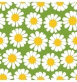 Seamless summer camomiles pattern vector image