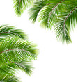 exotic frame with palm leaves place for your text vector image