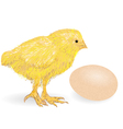 Chicken animai on white vector image