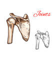 joint and bone of human shoulder isolated sketch vector image