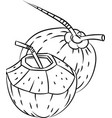 line drawing of coconuts -simple line vector image