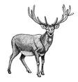 Engraving reindeer vector image