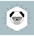 hipster style pug dog image vector image