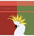 Cockatoo flat postcard vector image