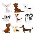 Dog breeds cartoon set vector image