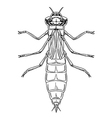 Dragonfly nymph vector image