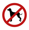 sign of dog prohibition isolated on white vector image