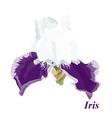Luxury iris vector image