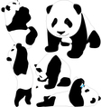 Panda babies silhouettes vector image vector image