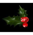 Holly Christmas Plant Holly berry vector image