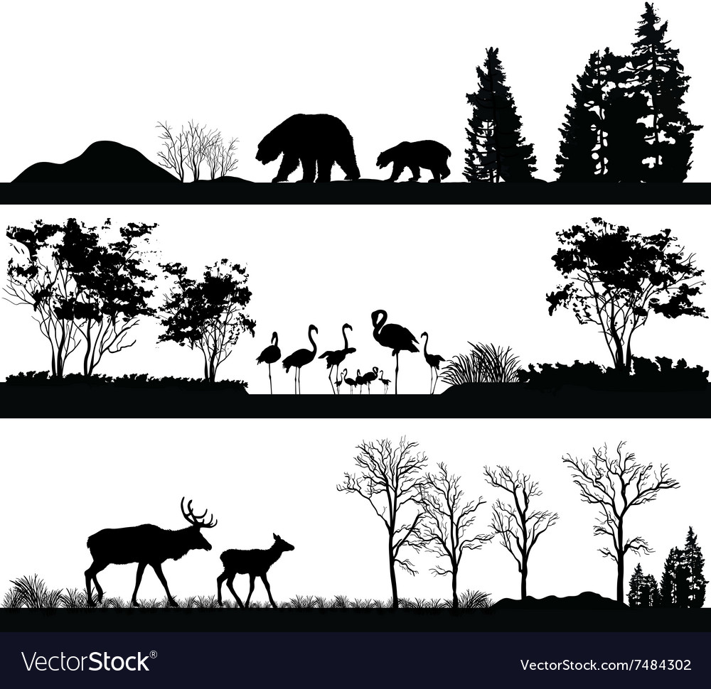 Wild animals bear flamingo deer vector