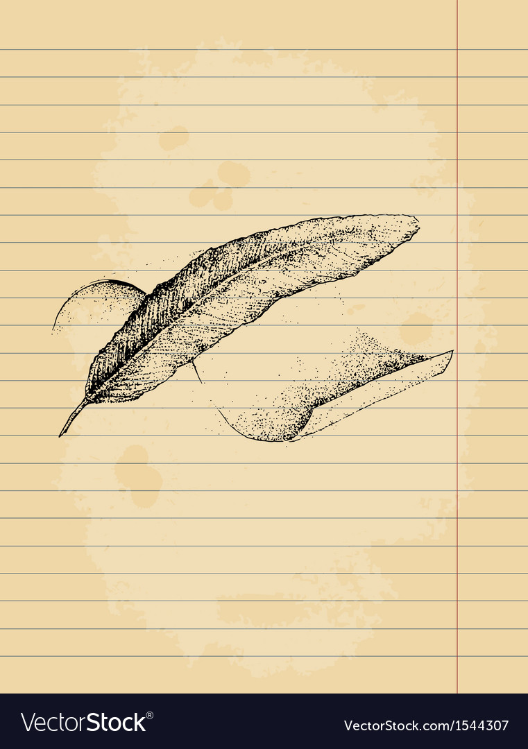 Feather and parchment drawing ink pen vector