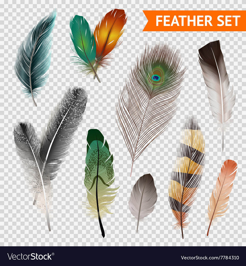 Feathers realistic set vector