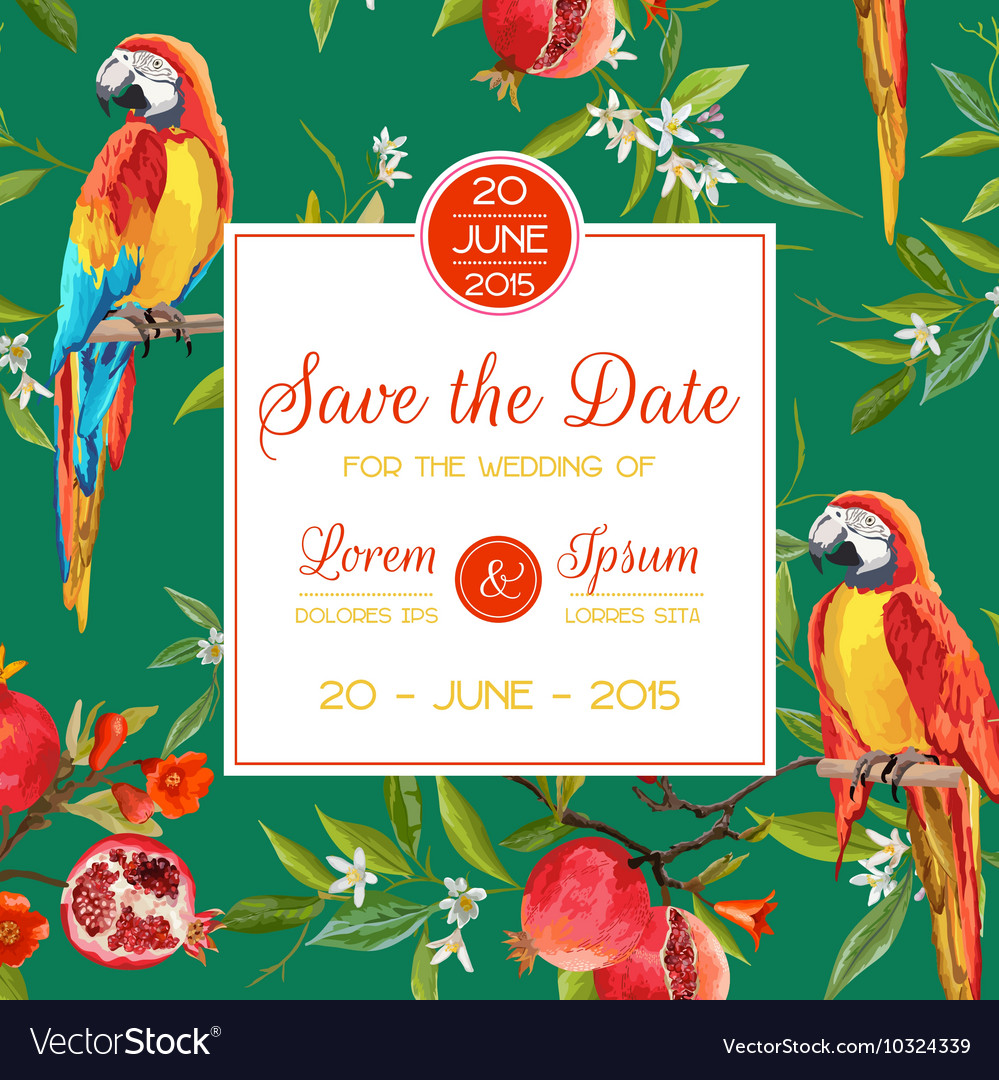 Invitation congratulation card tropical birds vector