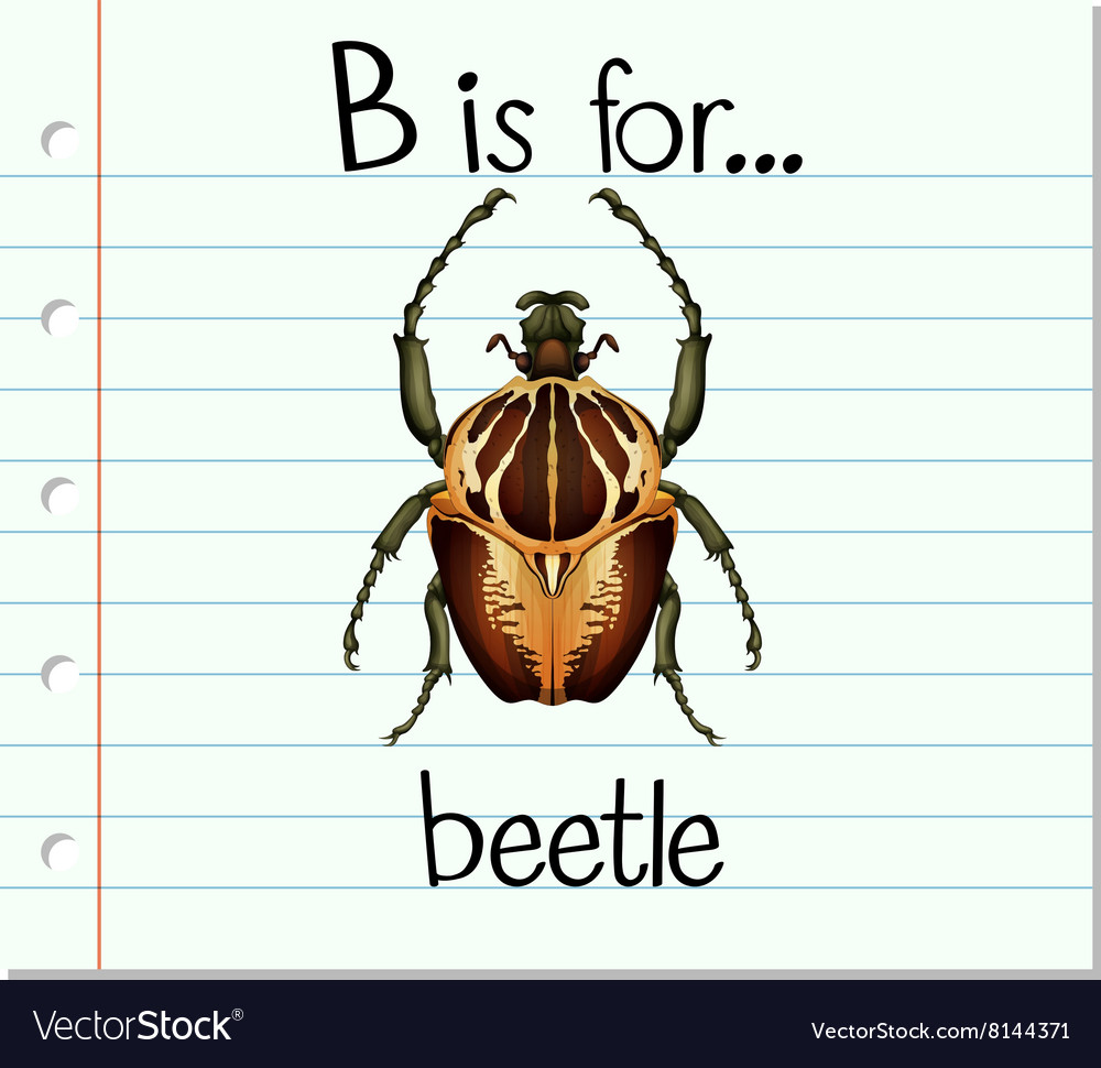 Flashcard letter b is for beetle vector