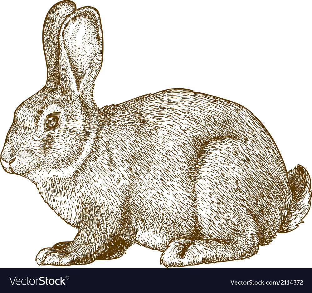 Engraving rabbit vector
