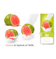 fresh guava in milk splashes vector image