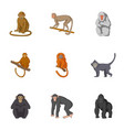 forest monkeys icons set cartoon style vector image