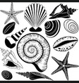 Shells collection vector image