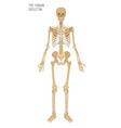 human skeleton image vector image