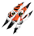 Tiger claw mark vector image