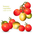 growing tomatoes realistic isolated on vector image