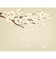 Blossoming tree brunch with spring flowers vector image vector image