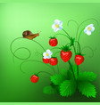 ripe wild strawberry and a vector image