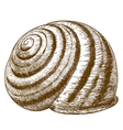 engraving striped snail shell vector image