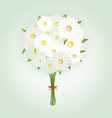 Chamomile Flower or White Daisy Daisy Bouquet vector image