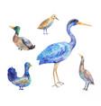 set of birds living in a swamp heron bittern vector image