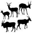 Antelopes Silhouettes vector image