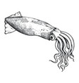 Squid hand drawn isolated icon vector image